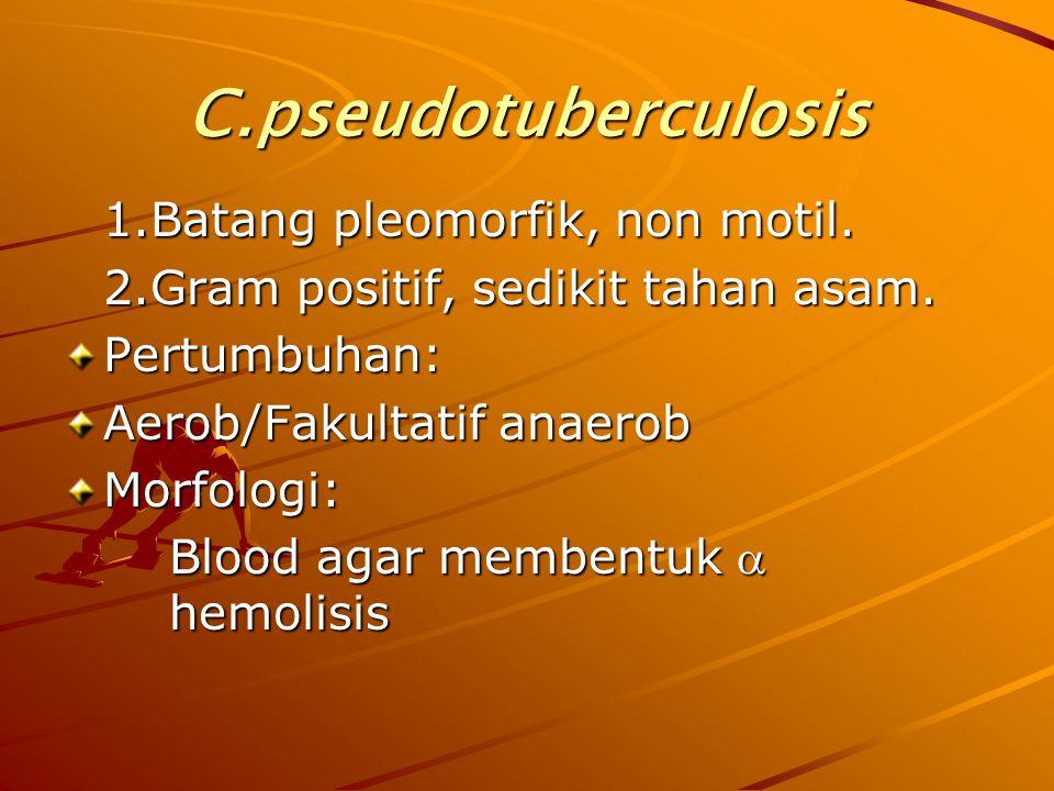 C.pseudotuberculosis 1.Batang pleomorfik, non motil. 2.Gram positif, sedikit tahan asam. Pertumbuhan: Aerob/Fakultatif anaerob Morfologi: Blood agar m