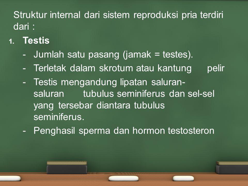 Struktur internal dari sistem reproduksi pria terdiri dari : 1. Testis - Jumlah satu pasang (jamak = testes). - Terletak dalam skrotum atau kantung pe