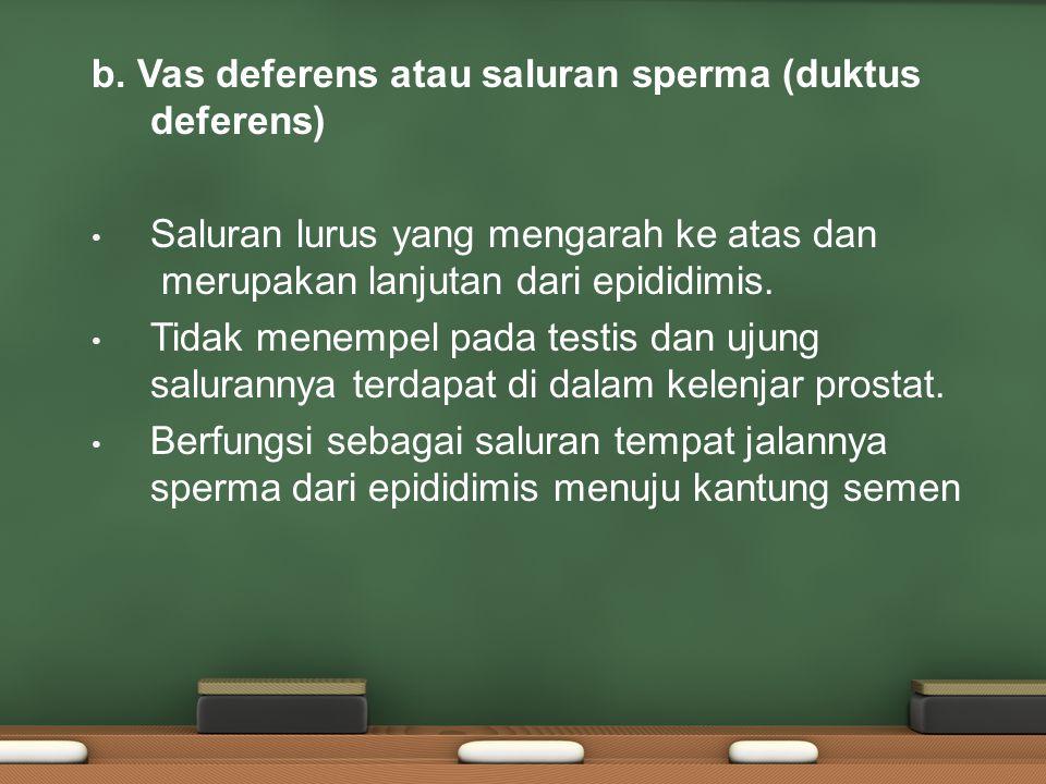 Epididimitis Infeksi yang sering terjadi pada saluran reproduksi pria.