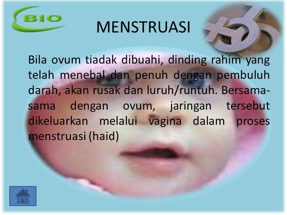 MENSTRUASI Bila ovum tiadak dibuahi, dinding rahim yang telah menebal dan penuh dengan pembuluh darah, akan rusak dan luruh/runtuh. Bersama- sama deng