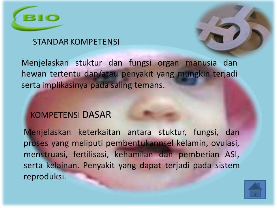 MENSTRUASI Bila ovum tiadak dibuahi, dinding rahim yang telah menebal dan penuh dengan pembuluh darah, akan rusak dan luruh/runtuh.