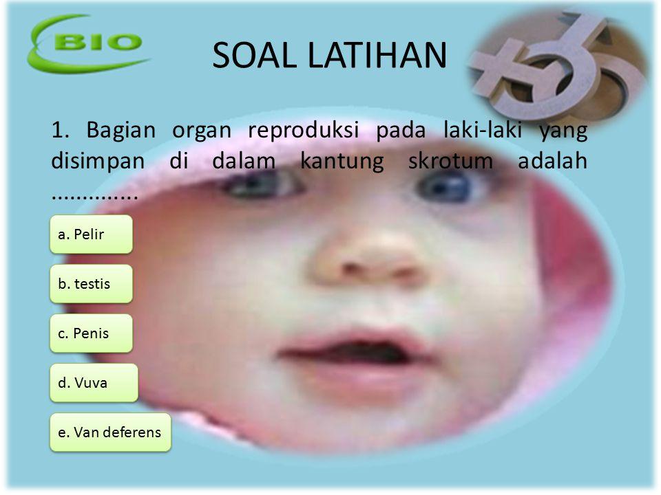 SOAL LATIHAN 1. Bagian organ reproduksi pada laki-laki yang disimpan di dalam kantung skrotum adalah.............. a. Pelir d. Vuva b. testis c. Penis