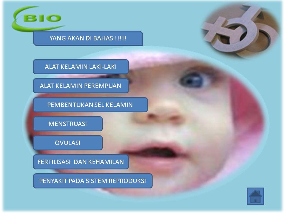 OVULASI -Ovulasi adalah proses keluarnya ovum dari ovarium.