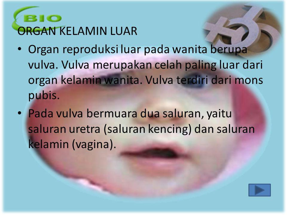 ORGAN KELAMIN LUAR Organ reproduksi luar pada wanita berupa vulva. Vulva merupakan celah paling luar dari organ kelamin wanita. Vulva terdiri dari mon