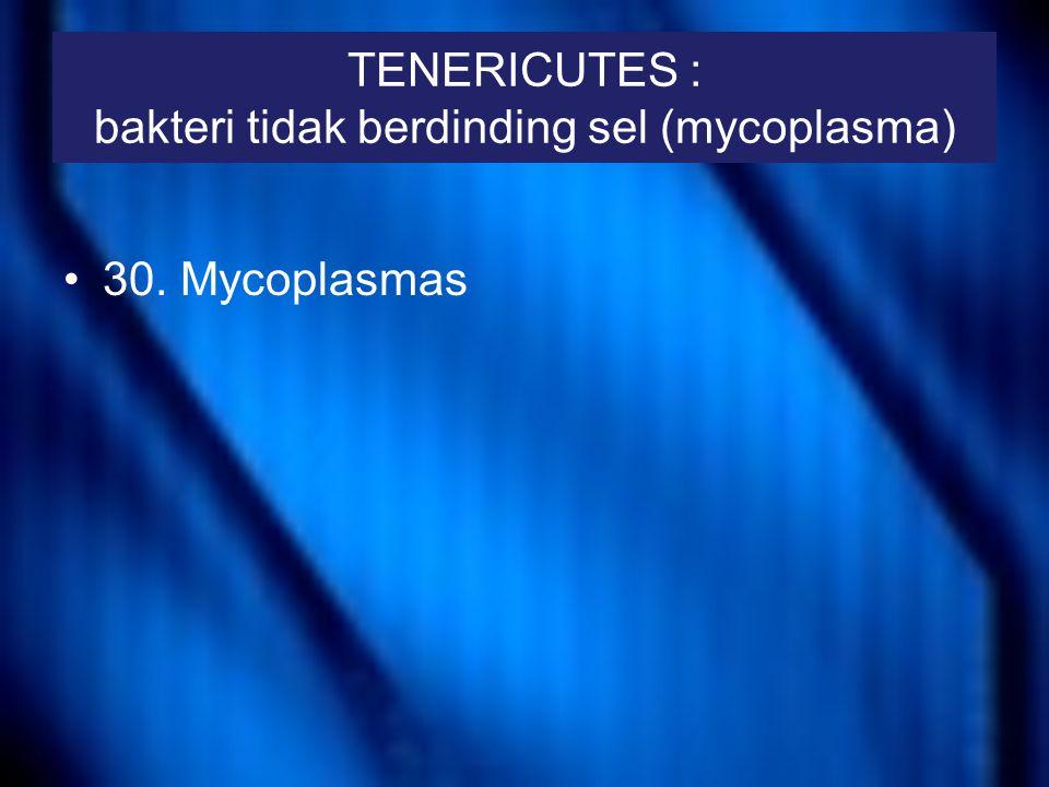 TENERICUTES : bakteri tidak berdinding sel (mycoplasma) 30. Mycoplasmas