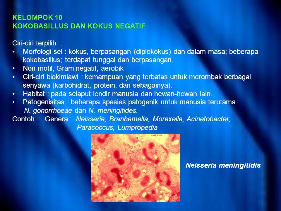 KELOMPOK 10 KOKOBASILLUS DAN KOKUS NEGATIF Ciri-ciri terpilih : Morfologi sel : kokus, berpasangan (diplokokus) dan dalam masa; beberapa kokobasillus; terdapat tunggal dan berpasangan.