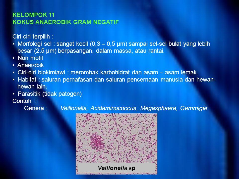 KELOMPOK 11 KOKUS ANAEROBIK GRAM NEGATIF Ciri-ciri terpilih : Morfologi sel : sangat kecil (0,3 – 0,5 μm) sampai sel-sel bulat yang lebih besar (2,5 μm) berpasangan, dalam massa, atau rantai.