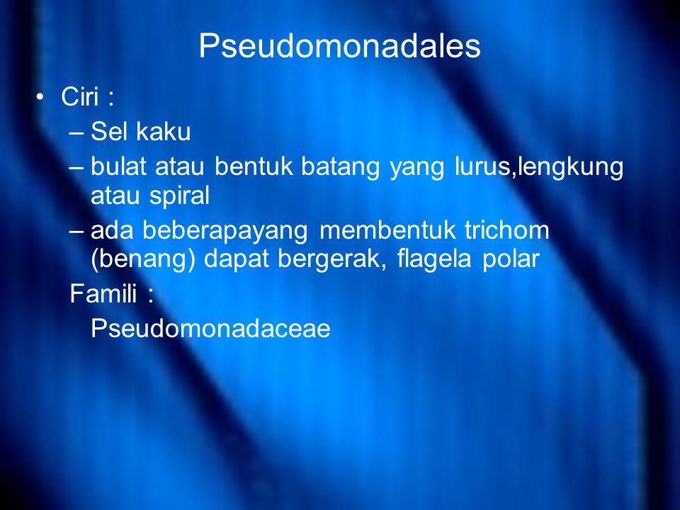 Pseudomonadales Ciri : –Sel kaku –bulat atau bentuk batang yang lurus,lengkung atau spiral –ada beberapayang membentuk trichom (benang) dapat bergerak, flagela polar Famili : Pseudomonadaceae