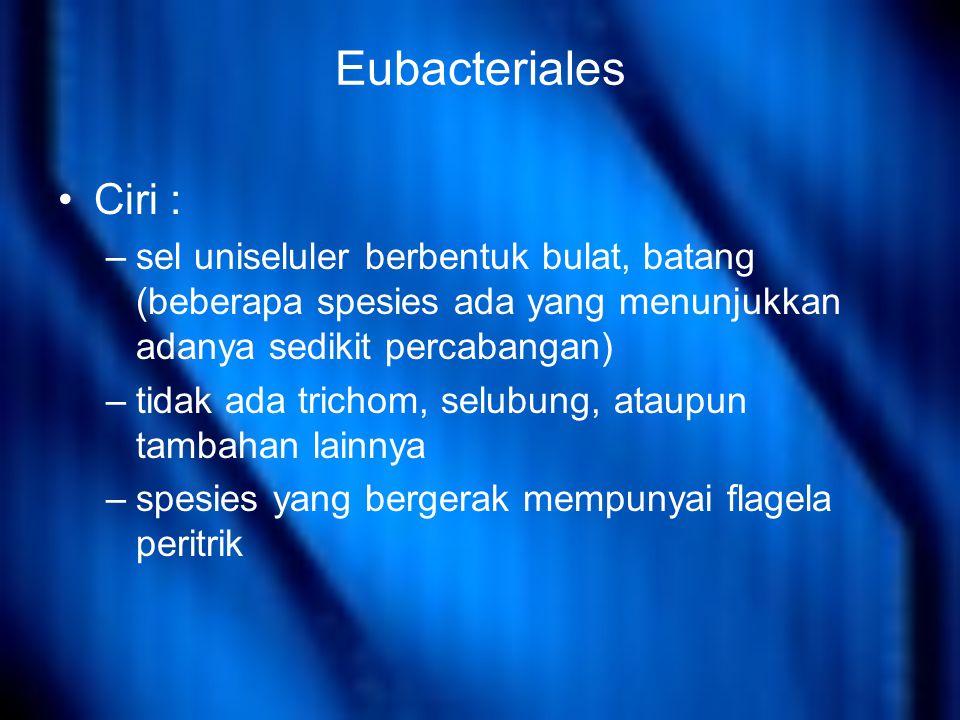Eubacteriales Ciri : –sel uniseluler berbentuk bulat, batang (beberapa spesies ada yang menunjukkan adanya sedikit percabangan) –tidak ada trichom, selubung, ataupun tambahan lainnya –spesies yang bergerak mempunyai flagela peritrik