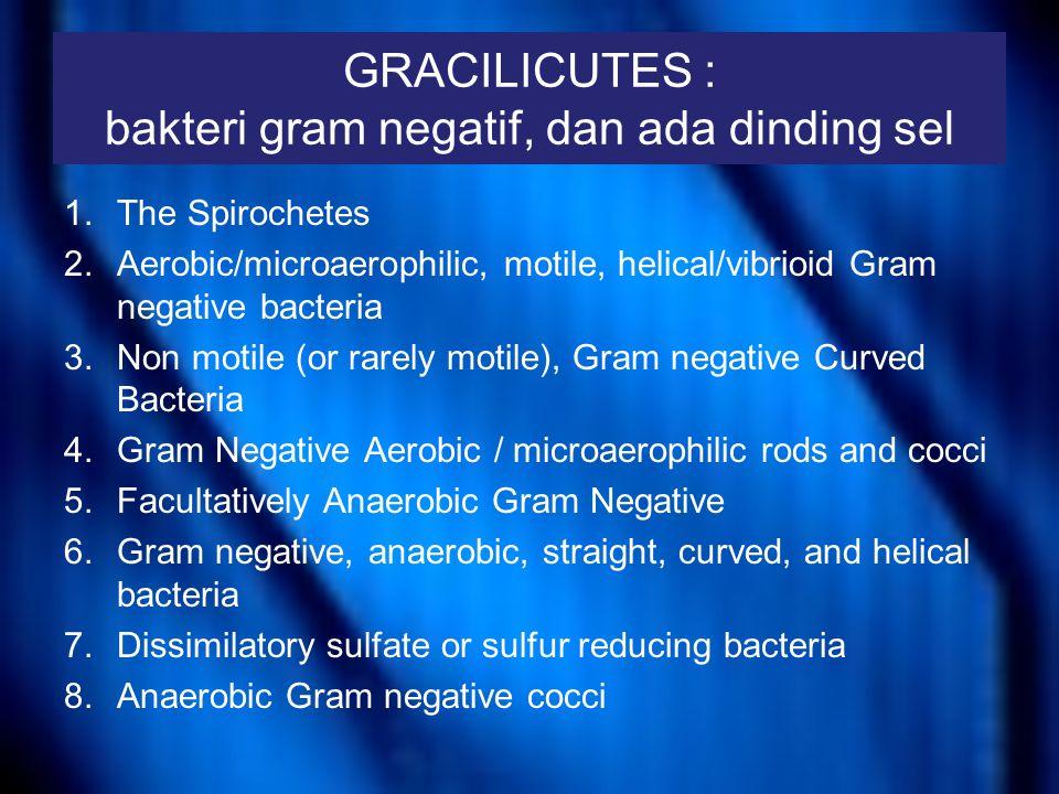 GRACILICUTES : bakteri gram negatif, dan ada dinding sel 9.