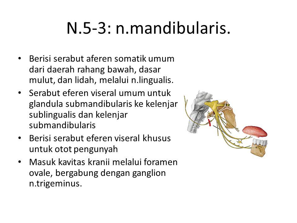 N.5-3: n.mandibularis.