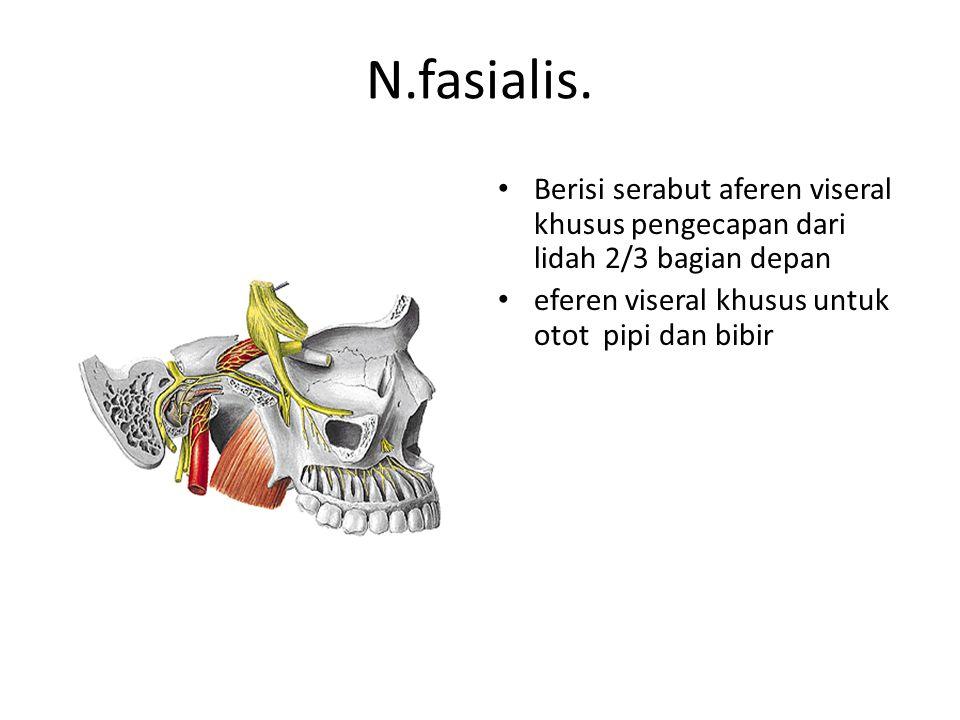 N.fasialis.