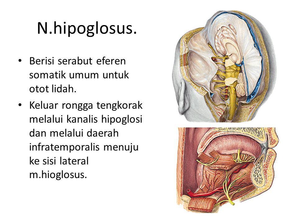 N.hipoglosus.Berisi serabut eferen somatik umum untuk otot lidah.