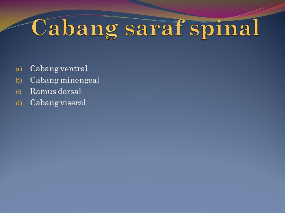 a) Cabang ventral b) Cabang minengeal c) Ramus dorsal d) Cabang viseral