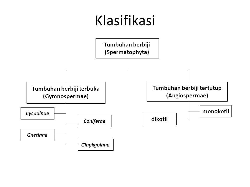 Klasifikasi Tumbuhan berbiji (Spermatophyta) Tumbuhan berbiji terbuka (Gymnospermae) Cycadinae Coniferae Gnetinae Gingkgoinae Tumbuhan berbiji tertutu