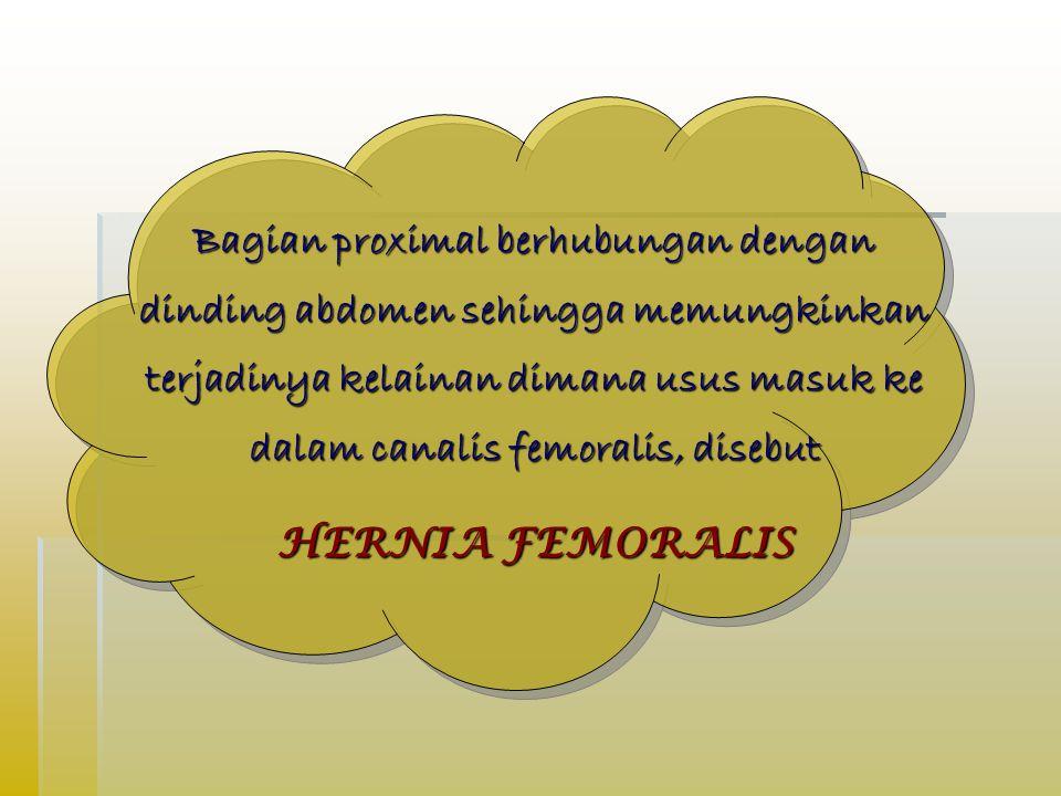Bagian proximal berhubungan dengan dinding abdomen sehingga memungkinkan terjadinya kelainan dimana usus masuk ke dalam canalis femoralis, disebut HERNIA FEMORALIS