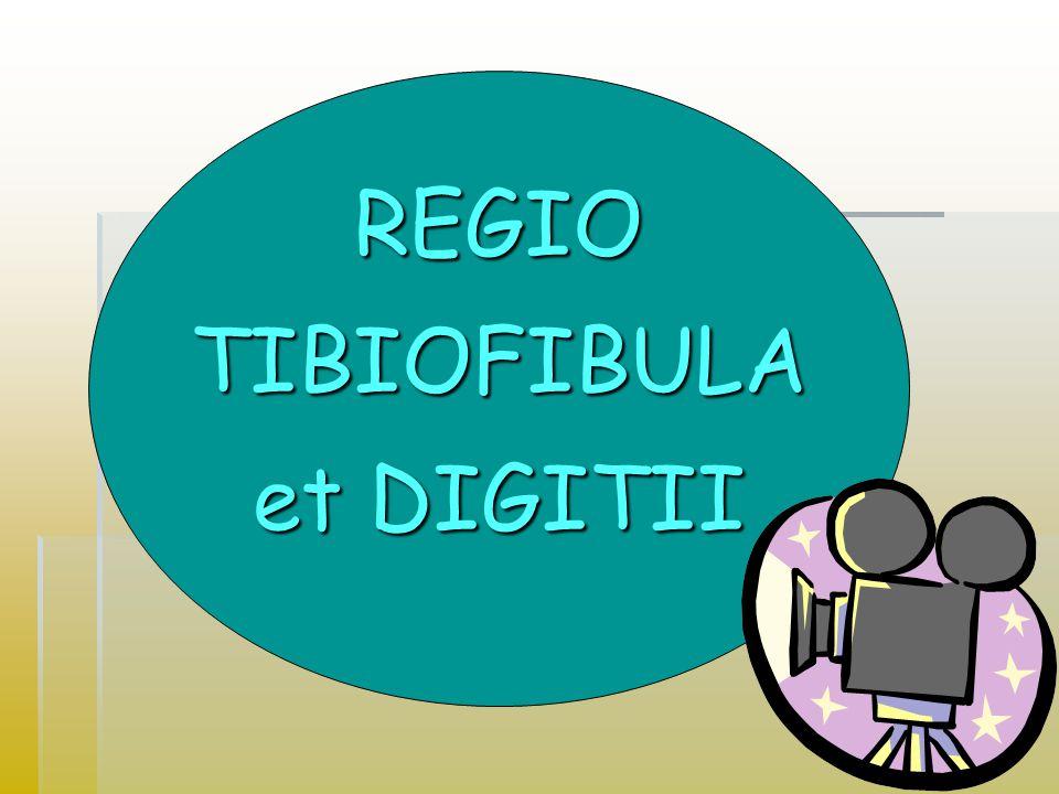 REGIO TIBIOFIBULA et DIGITII