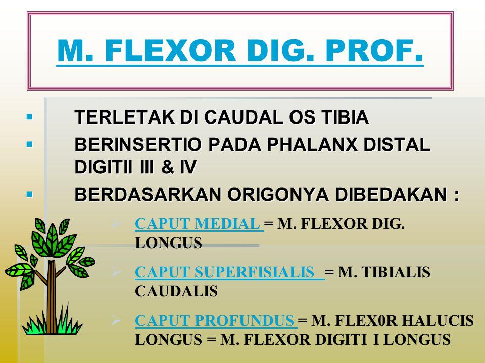 M.FLEXOR DIG. PROF. M. FLEXOR DIG. PROF.