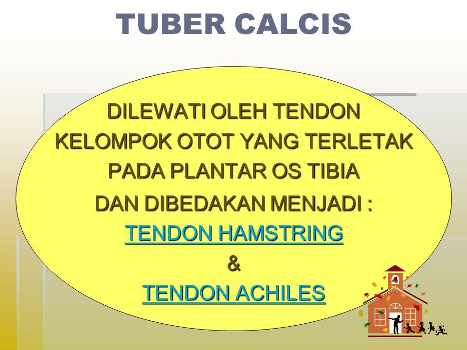 DILEWATI OLEH TENDON KELOMPOK OTOT YANG TERLETAK PADA PLANTAR OS TIBIA DAN DIBEDAKAN MENJADI : TENDON HAMSTRING TENDON HAMSTRING& TENDON ACHILES TENDON ACHILES
