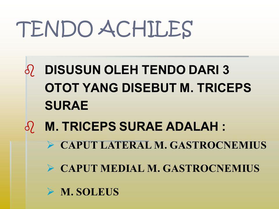 TENDO ACHILES   DISUSUN OLEH TENDO DARI 3 OTOT YANG DISEBUT M.
