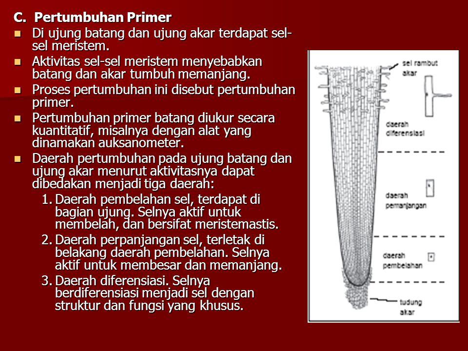 C. Pertumbuhan Primer Di ujung batang dan ujung akar terdapat sel- sel meristem. Di ujung batang dan ujung akar terdapat sel- sel meristem. Aktivitas