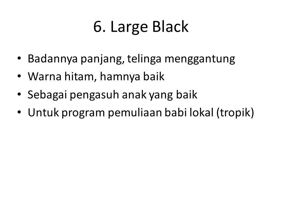6. Large Black Badannya panjang, telinga menggantung Warna hitam, hamnya baik Sebagai pengasuh anak yang baik Untuk program pemuliaan babi lokal (trop