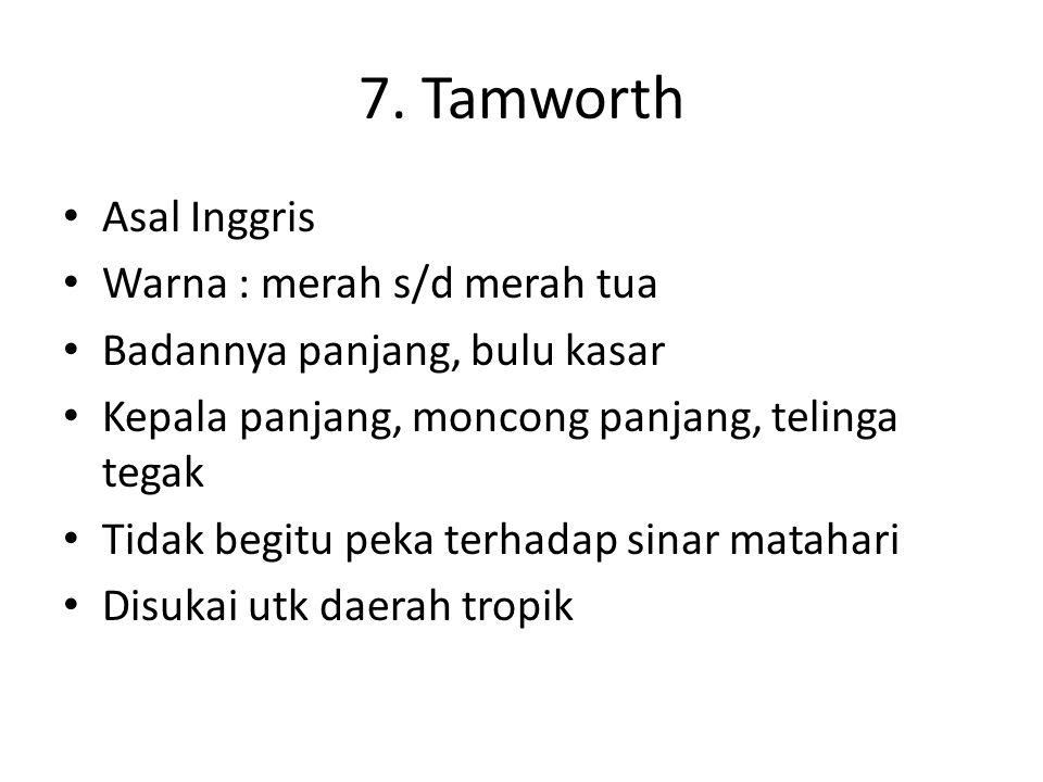 7. Tamworth Asal Inggris Warna : merah s/d merah tua Badannya panjang, bulu kasar Kepala panjang, moncong panjang, telinga tegak Tidak begitu peka ter