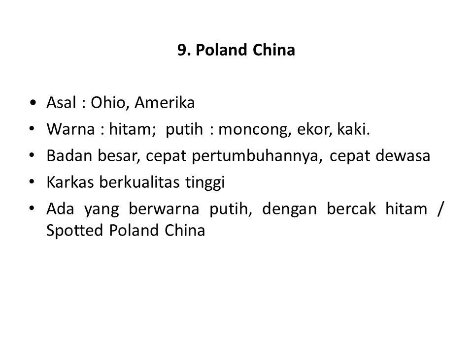 9. Poland China Asal : Ohio, Amerika Warna : hitam; putih : moncong, ekor, kaki. Badan besar, cepat pertumbuhannya, cepat dewasa Karkas berkualitas ti