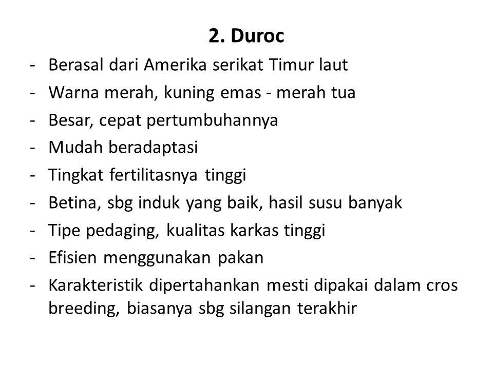 2. Duroc -Berasal dari Amerika serikat Timur laut -Warna merah, kuning emas - merah tua -Besar, cepat pertumbuhannya -Mudah beradaptasi -Tingkat ferti