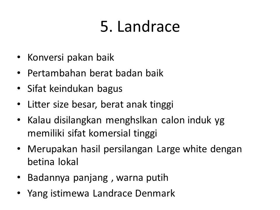 5. Landrace Konversi pakan baik Pertambahan berat badan baik Sifat keindukan bagus Litter size besar, berat anak tinggi Kalau disilangkan menghslkan c