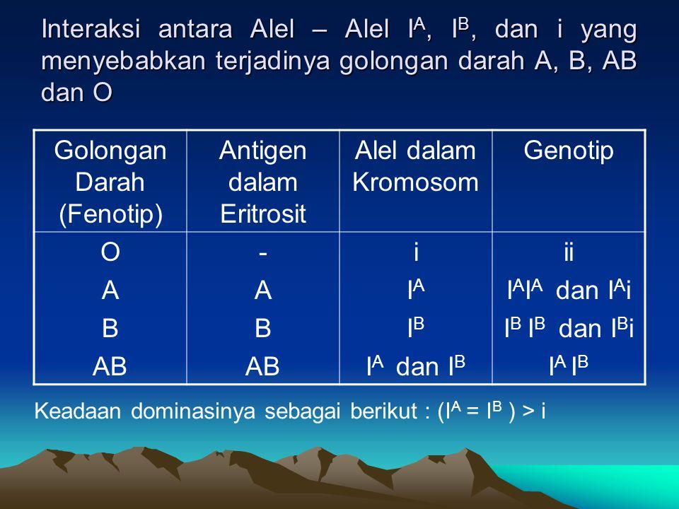 Interaksi antara Alel – Alel I A, I B, dan i yang menyebabkan terjadinya golongan darah A, B, AB dan O Golongan Darah (Fenotip) Antigen dalam Eritrosi