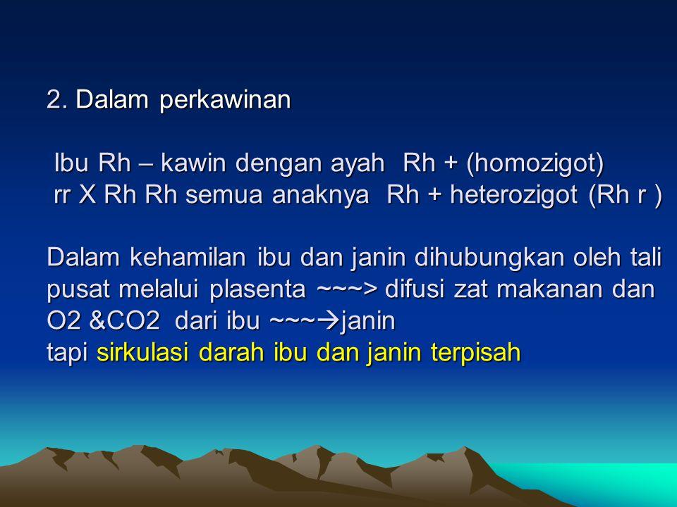 2. Dalam perkawinan Ibu Rh – kawin dengan ayah Rh + (homozigot) rr X Rh Rh semua anaknya Rh + heterozigot (Rh r ) Dalam kehamilan ibu dan janin dihubu