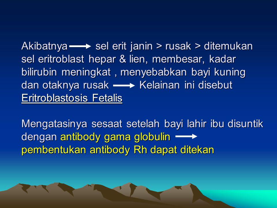 Akibatnya sel erit janin > rusak > ditemukan sel eritroblast hepar & lien, membesar, kadar bilirubin meningkat, menyebabkan bayi kuning dan otaknya ru