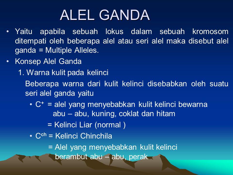 ALEL GANDA Yaitu apabila sebuah lokus dalam sebuah kromosom ditempati oleh beberapa alel atau seri alel maka disebut alel ganda = Multiple Alleles. Ko