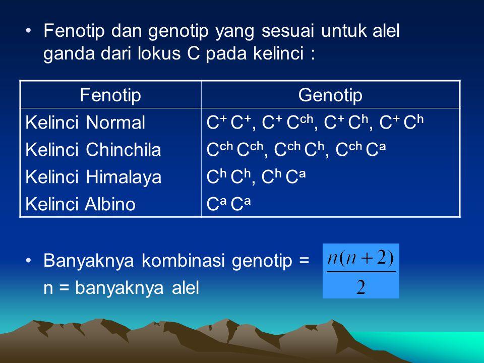 Fenotip dan genotip yang sesuai untuk alel ganda dari lokus C pada kelinci : FenotipGenotip Kelinci Normal Kelinci Chinchila Kelinci Himalaya Kelinci