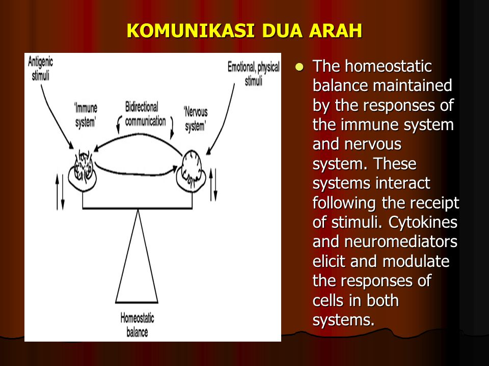KOMUNIKASI DUA ARAH The homeostatic balance maintained by the responses of the immune system and nervous system.