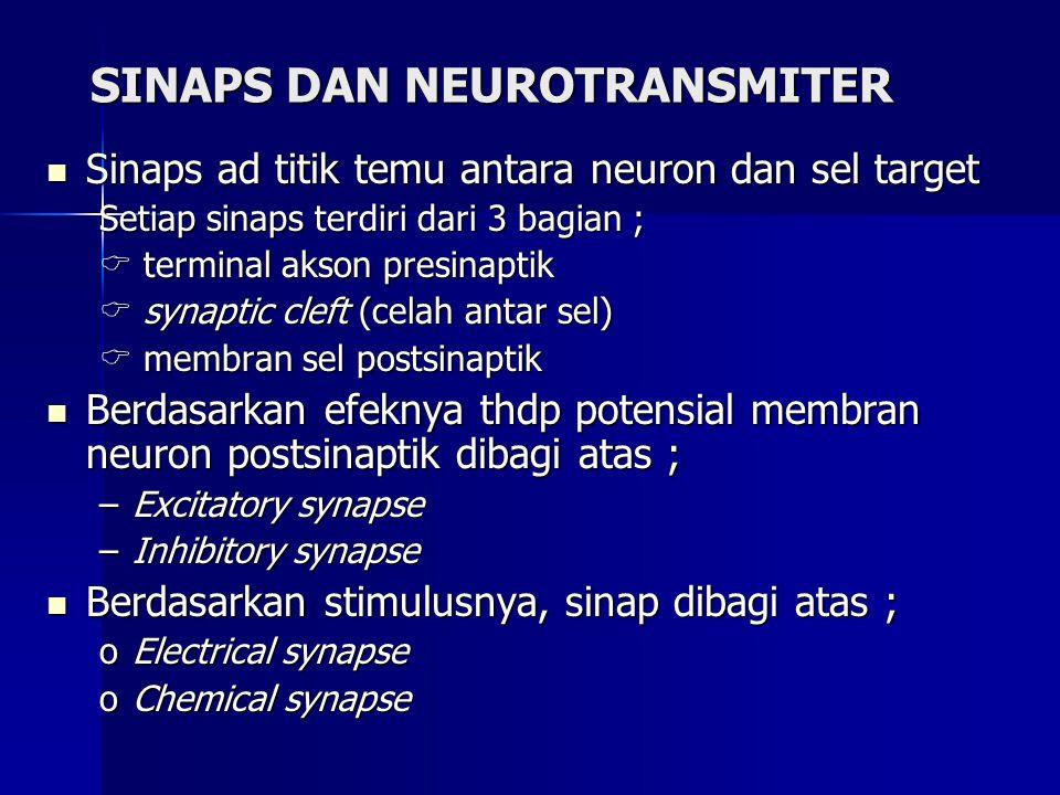 SINAPS DAN NEUROTRANSMITER Sinaps ad titik temu antara neuron dan sel target Sinaps ad titik temu antara neuron dan sel target Setiap sinaps terdiri d