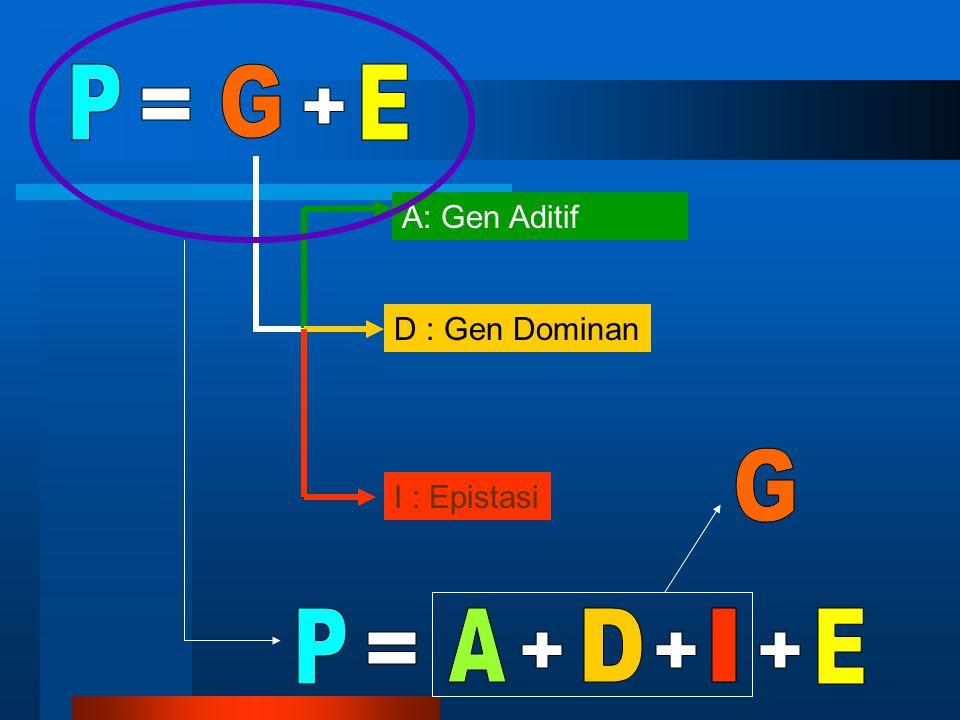 2 22 H 2 = 2 HERITABILITAS (H 2 ) : merupakan proporsi antara Ragam Genetik terhadap Ragam Fenotip 2
