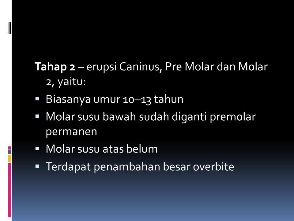 Tahap 2 – erupsi Caninus, Pre Molar dan Molar 2, yaitu:  Biasanya umur 10–13 tahun  Molar susu bawah sudah diganti premolar permanen  Molar susu atas belum  Terdapat penambahan besar overbite