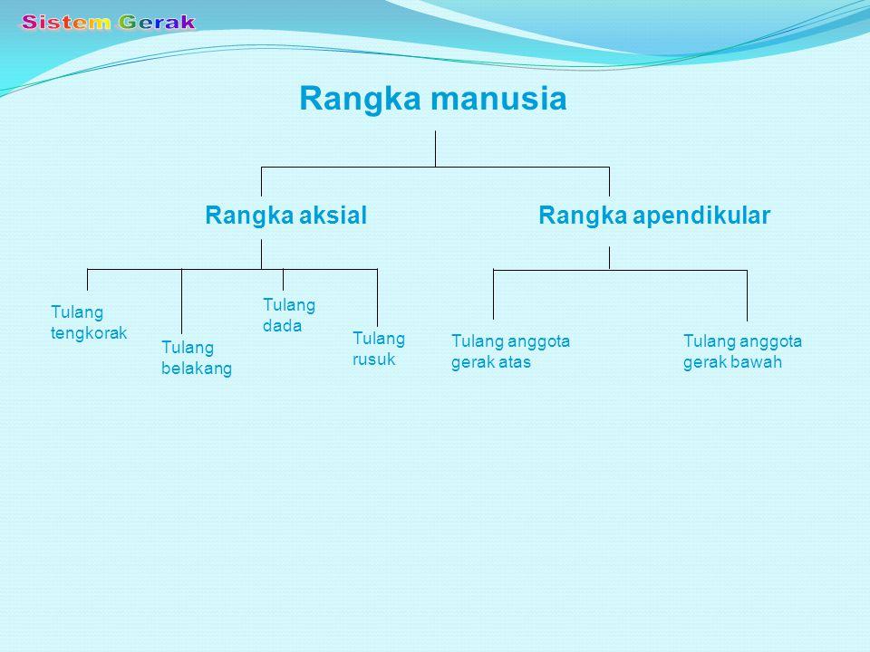 ARTIKULASI ( SENDI ) Artikulasi/Sendi = hubungan antara tulang satu dengan tulang yang lain.