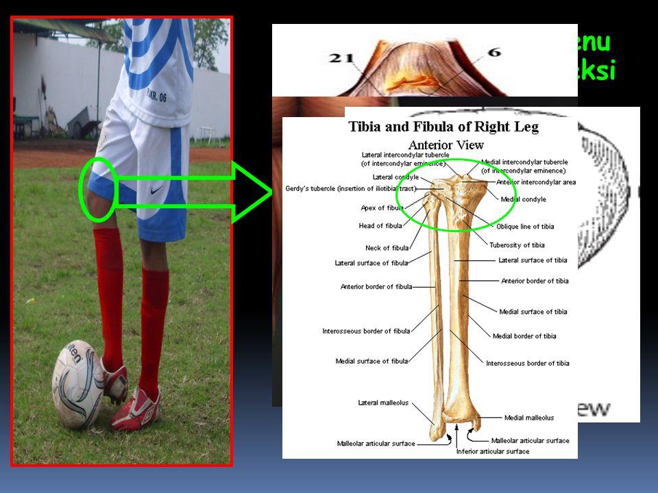  Pada Articulatio Genu terjadi gerakan Fleksi  Bidang gerak: Sagital  Axis / Sumbu: Transversal/Frontal  Tulang : Patella,Tibia,Fibula  Otot yang