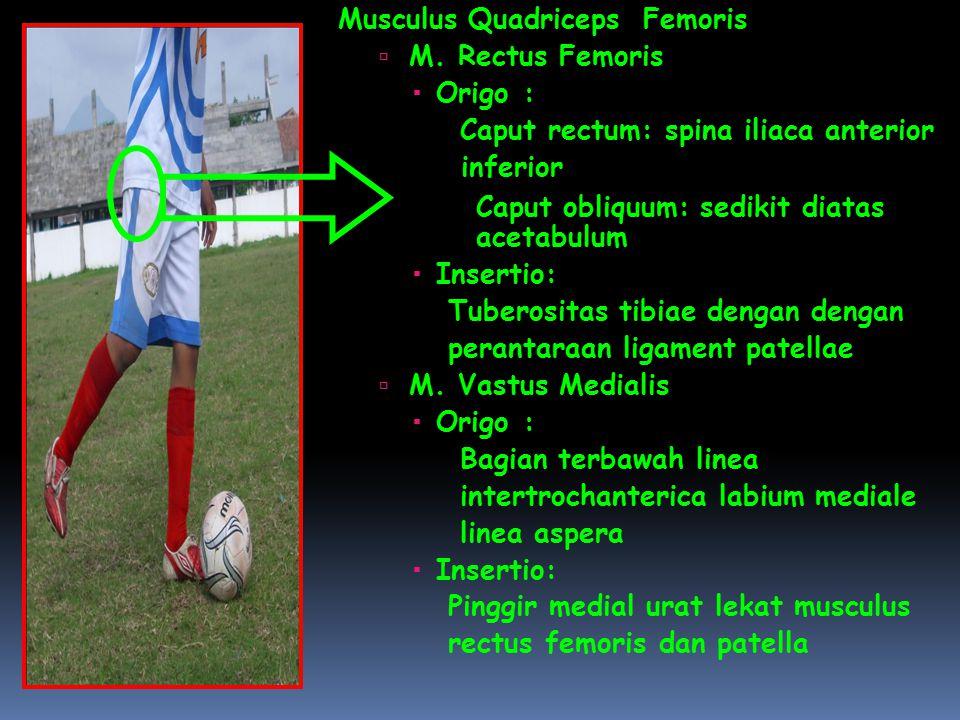 Musculus Quadriceps Femoris  M. Rectus Femoris  Origo: Caput rectum: spina iliaca anterior inferior Caput obliquum: sedikit diatas acetabulum  Inse