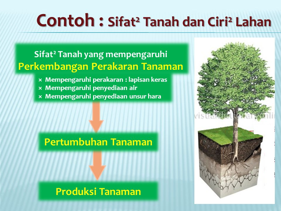Contoh : Sifat 2 Tanah dan Ciri 2 Lahan Sifat 2 Tanah yang mempengaruhi Perkembangan Perakaran Tanaman  Mempengaruhi perakaran : lapisan keras  Mempengaruhi penyediaan air  Mempengaruhi penyediaan unsur hara Pertumbuhan Tanaman Produksi Tanaman