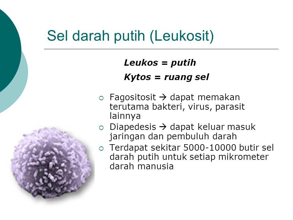 Sel darah putih (Leukosit)  Fagositosit  dapat memakan terutama bakteri, virus, parasit lainnya  Diapedesis  dapat keluar masuk jaringan dan pembuluh darah  Terdapat sekitar 5000-10000 butir sel darah putih untuk setiap mikrometer darah manusia Leukos = putih Kytos = ruang sel