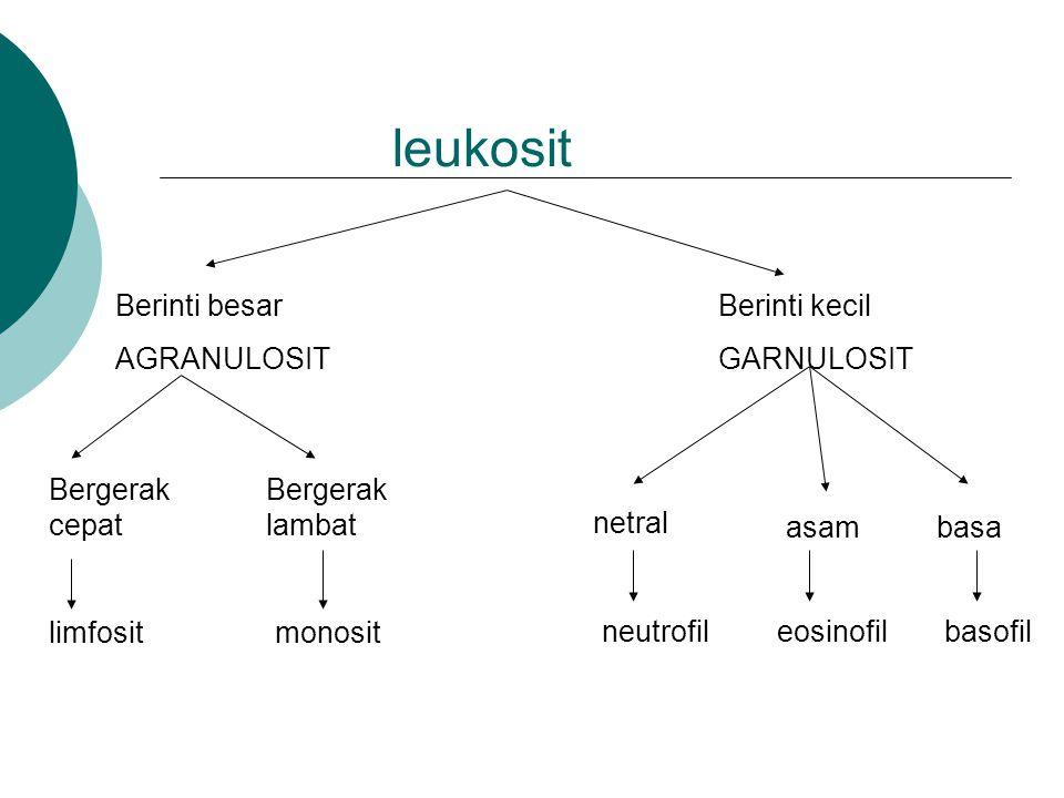 leukosit Berinti besar AGRANULOSIT Berinti kecil GARNULOSIT Bergerak cepat Bergerak lambat netral asambasa limfositmonosit neutrofileosinofilbasofil