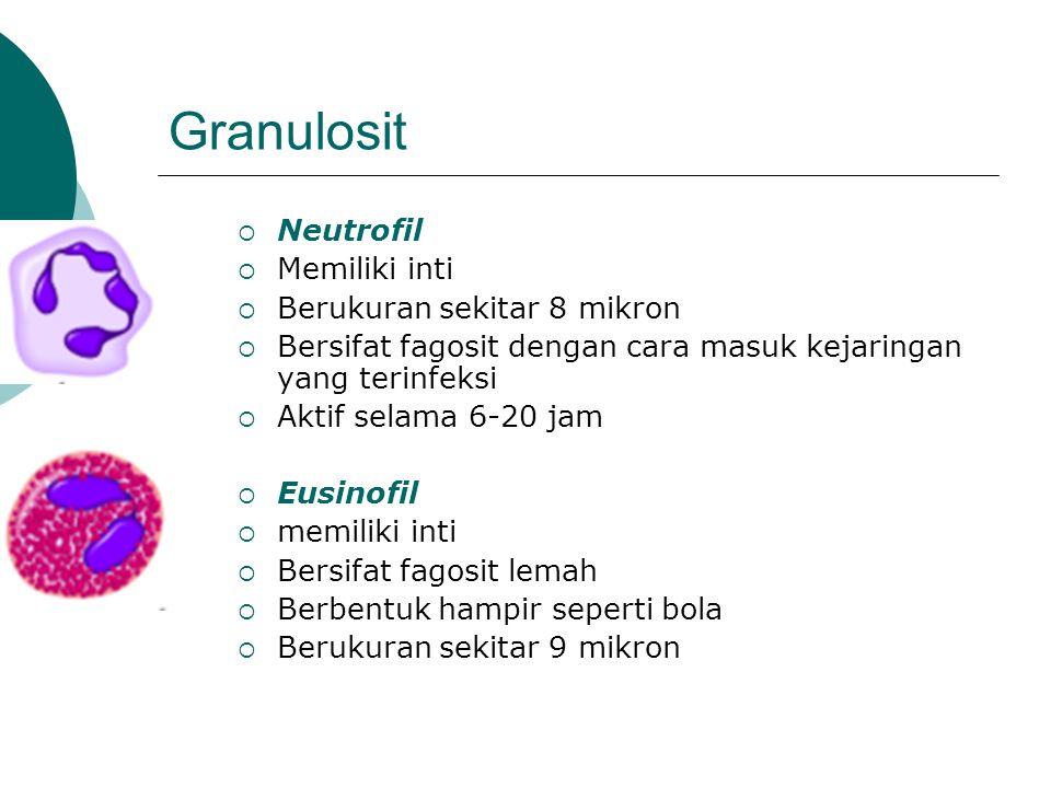 Granulosit  Neutrofil  Memiliki inti  Berukuran sekitar 8 mikron  Bersifat fagosit dengan cara masuk kejaringan yang terinfeksi  Aktif selama 6-20 jam  Eusinofil  memiliki inti  Bersifat fagosit lemah  Berbentuk hampir seperti bola  Berukuran sekitar 9 mikron