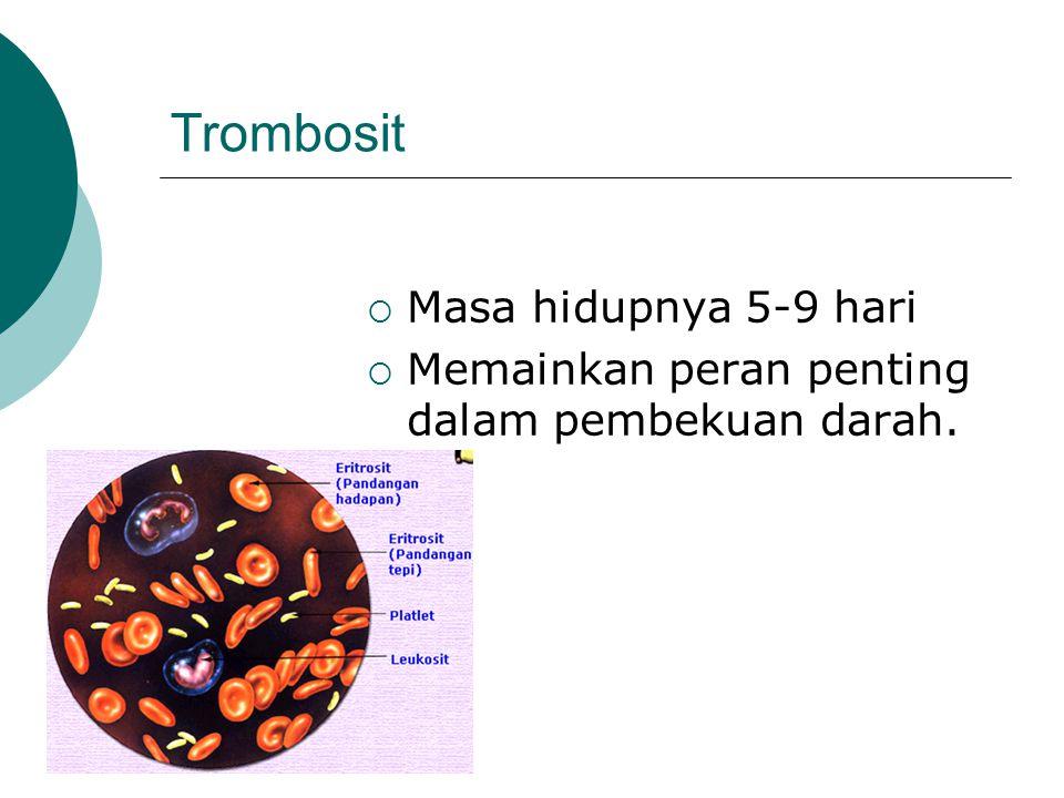 Trombosit  Masa hidupnya 5-9 hari  Memainkan peran penting dalam pembekuan darah.