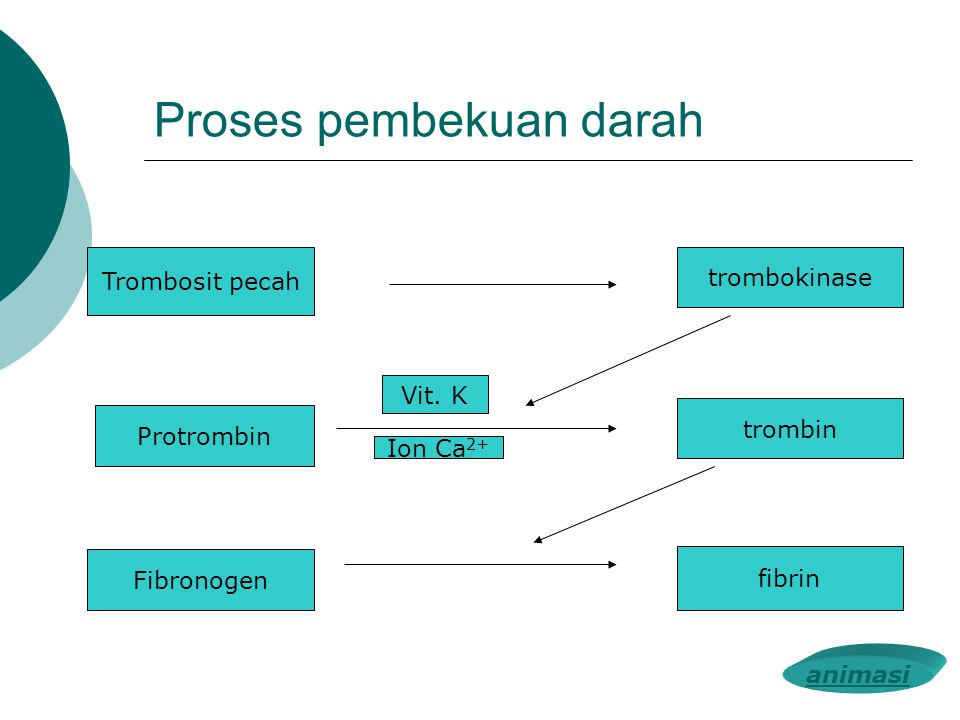 Proses pembekuan darah Trombosit pecah trombokinase Protrombin trombin Fibronogen fibrin Vit. K Ion Ca 2+ animasi