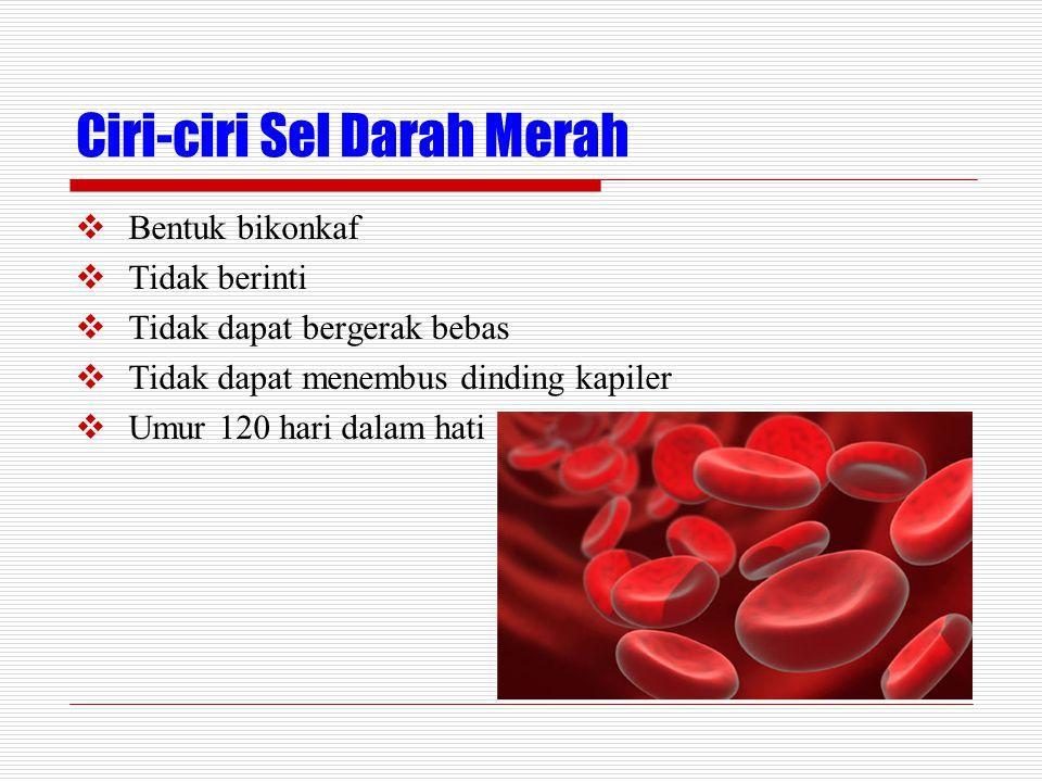 Ciri-ciri Sel Darah Merah  Bentuk bikonkaf  Tidak berinti  Tidak dapat bergerak bebas  Tidak dapat menembus dinding kapiler  Umur 120 hari dalam hati