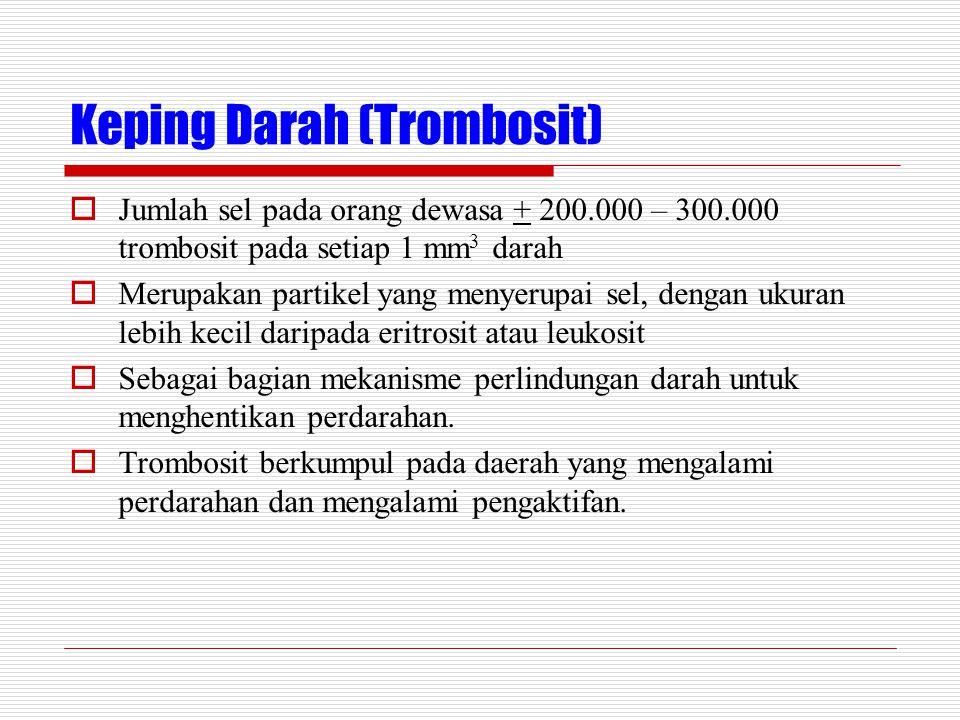 Keping Darah (Trombosit)  Jumlah sel pada orang dewasa + 200.000 – 300.000 trombosit pada setiap 1 mm 3 darah  Merupakan partikel yang menyerupai sel, dengan ukuran lebih kecil daripada eritrosit atau leukosit  Sebagai bagian mekanisme perlindungan darah untuk menghentikan perdarahan.